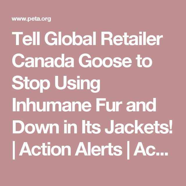 Tell Global Retailer Canada Goose to Stop Using Inhumane Fur and Down in Its Jackets! | Action Alerts | Actions | PETA