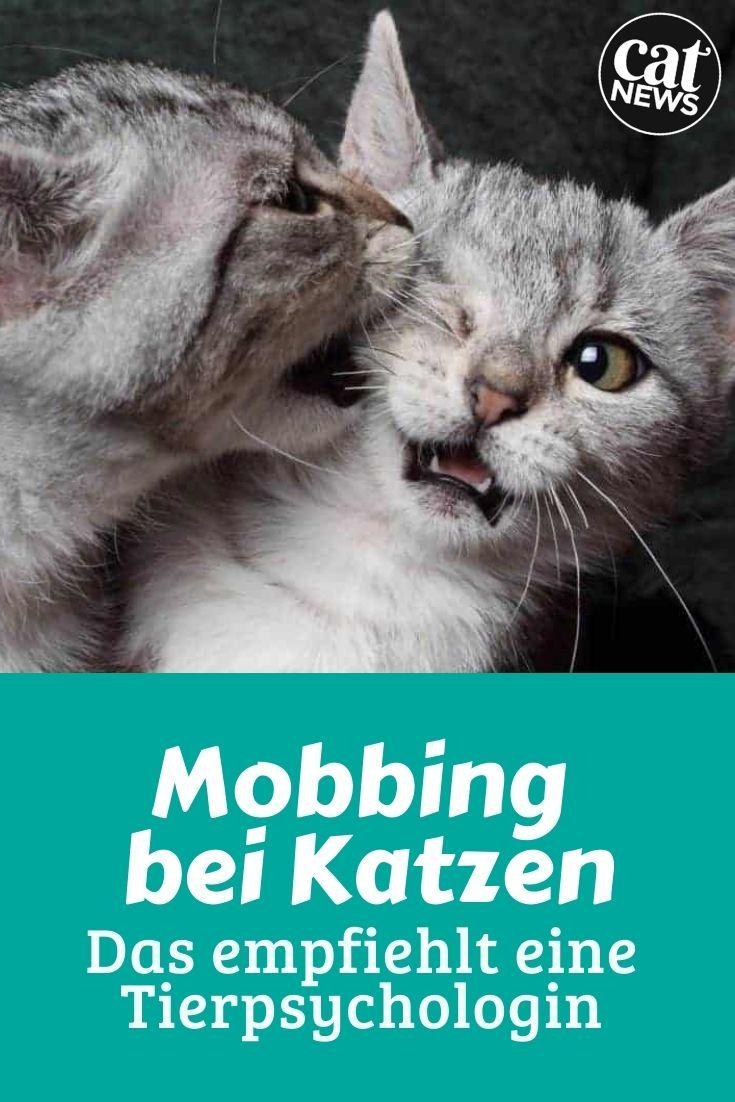 Stalking und Mobbing bei Katzen erkennen Was eine Tierpsychologin ...