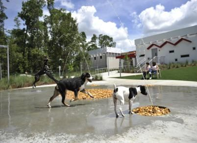 Best Friends Pet Care : Walt Disney World Resort |