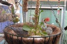 Hanging Planter Bird Foraging