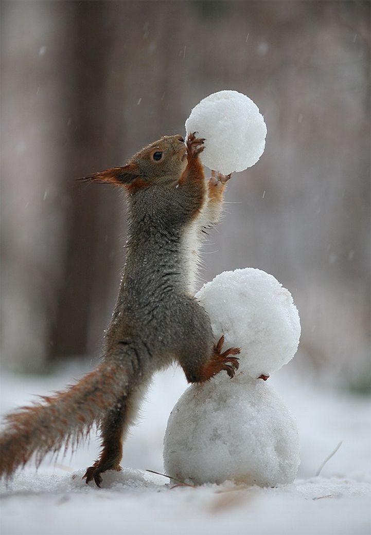 Две прелестные Бурундуки Возьмите фотографии, играть в мяч, и построить снеговика