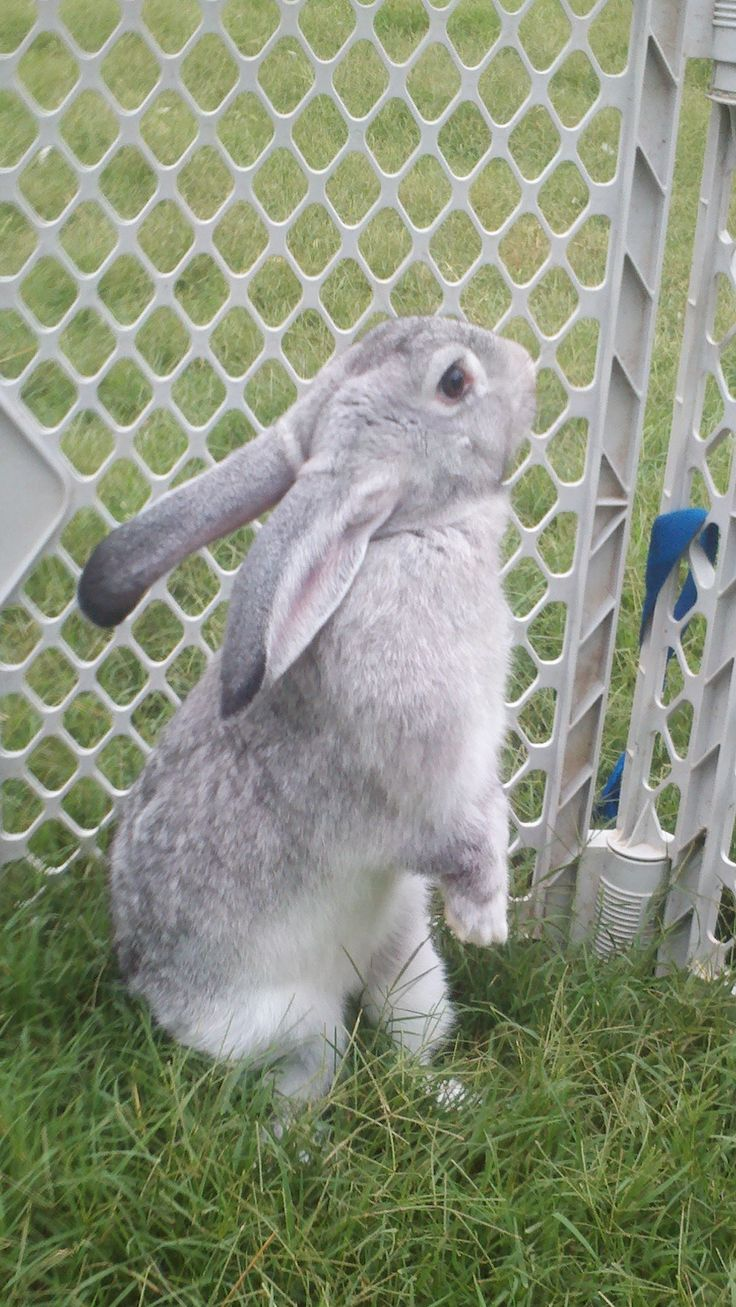 184 best rabbits images on pinterest animals bunny rabbits and