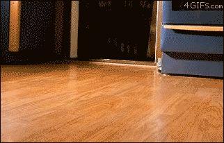 corgi pups!: 47 Puppies, Cute Puppies, Cutest Gif, Baby Corgi, Hardwood Floors, Corgi Puppies, Corgi Dogs, Animal, Watches Click