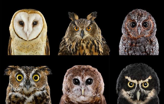 These owls may wear the same game face, but when it comes to personality, they're as different as day and night.