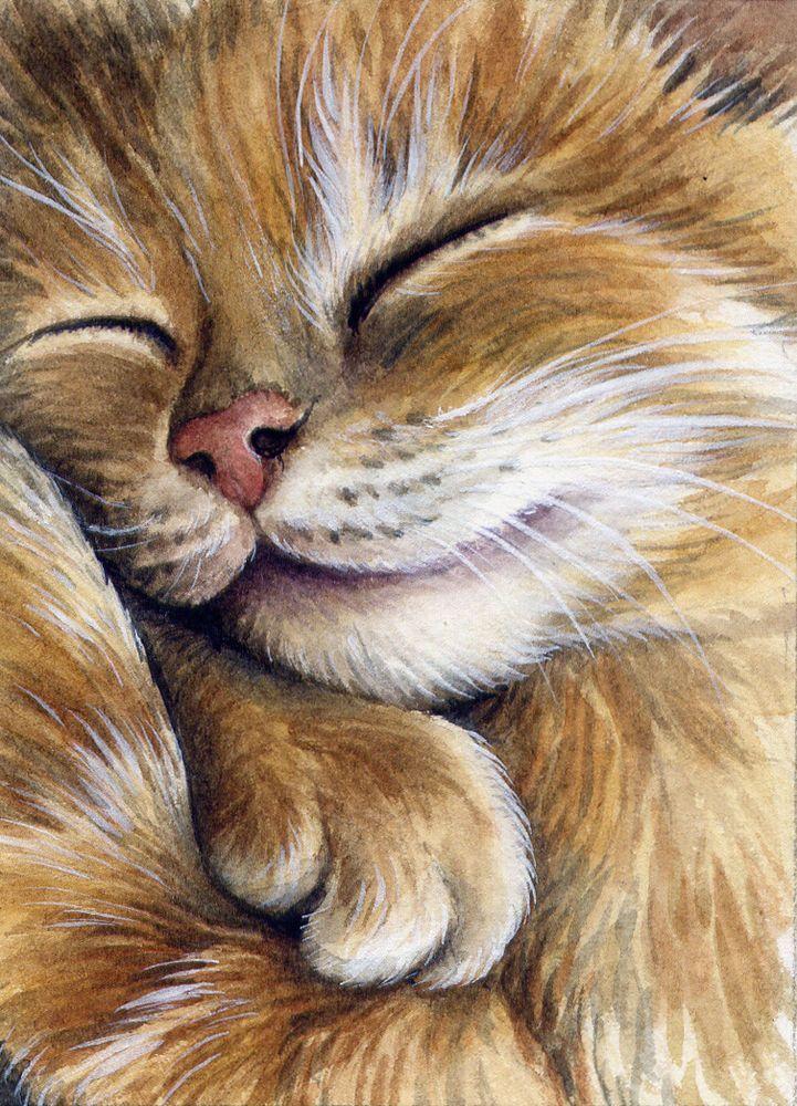 Картинка спящий кот рисунок