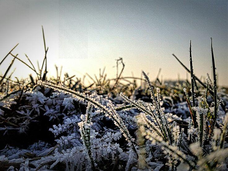# grass#ice