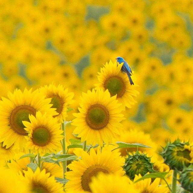 Blue over you........ - Gardening Lene