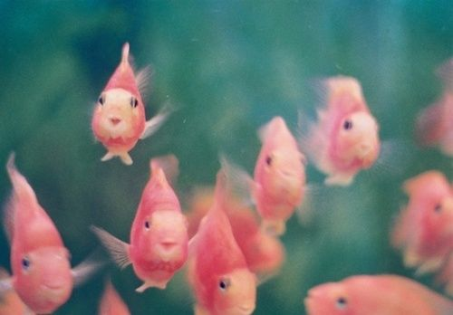 smiling pink fish. because 234,532,232,654,454,464,232,678,098,776 other varieties of amazing creatures without a pastel pink smiling fish would just be lazy