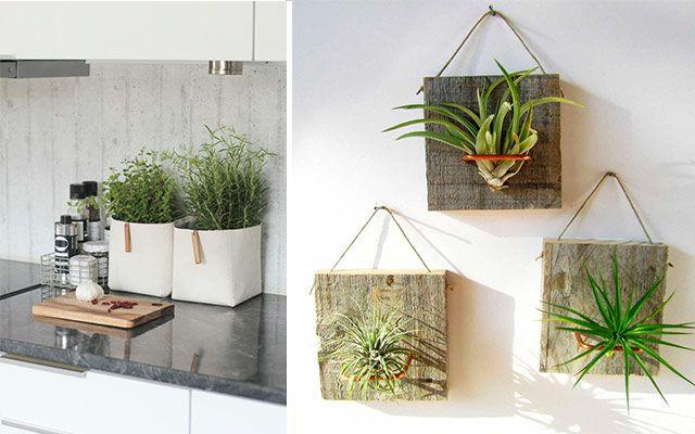 Ideas originales para decorar la cocina con plantas - Macetas originales para plantas ...