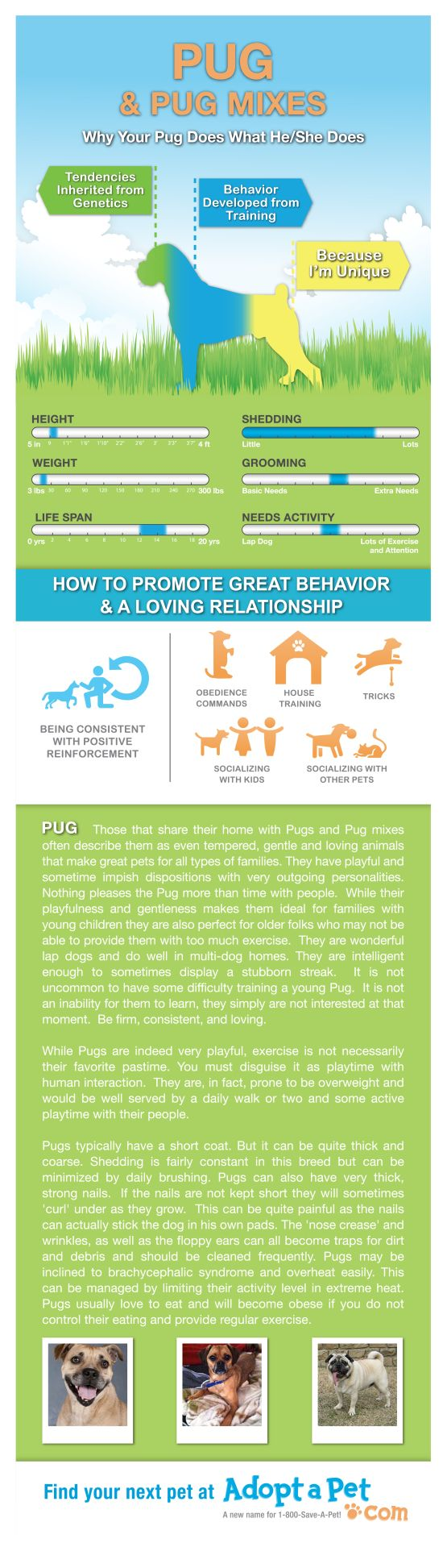 Dog Breeds 101 #Pugs are wonderful dogs that make great pets. @LorieAHuston  Check out this Infographic!