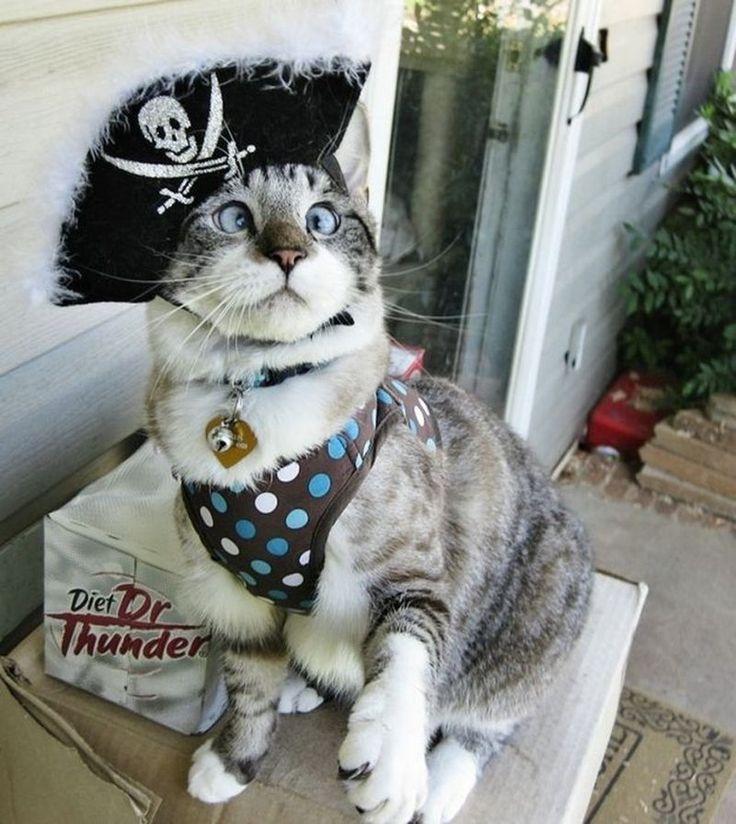 Хозяева кошек придумали для своих питомцев самые оригинальные наряды