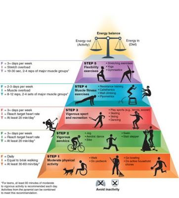 Recommended Exercise Guidelines - The Physical Activity Pyramid [Infographic]