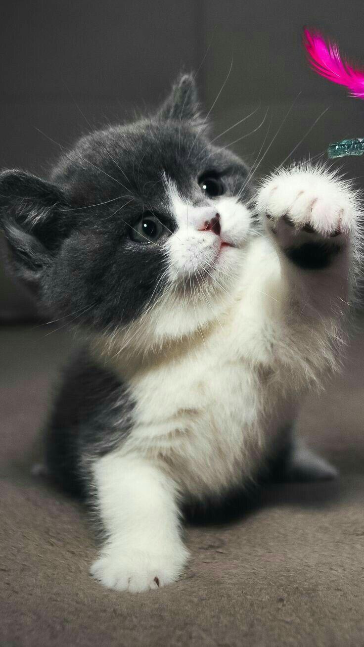 366 best ☆ Cats & Kittens ☆ images on Pinterest