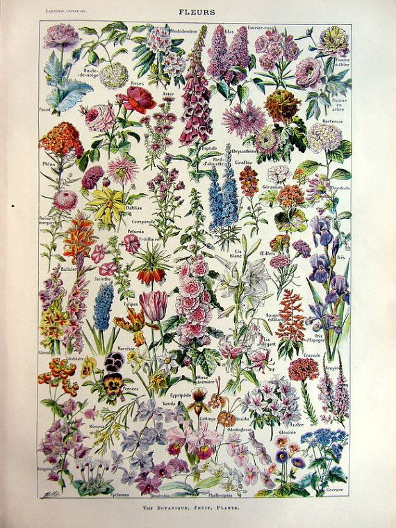 vintage french 1923 flowers engraving / original antique plantes plate color print