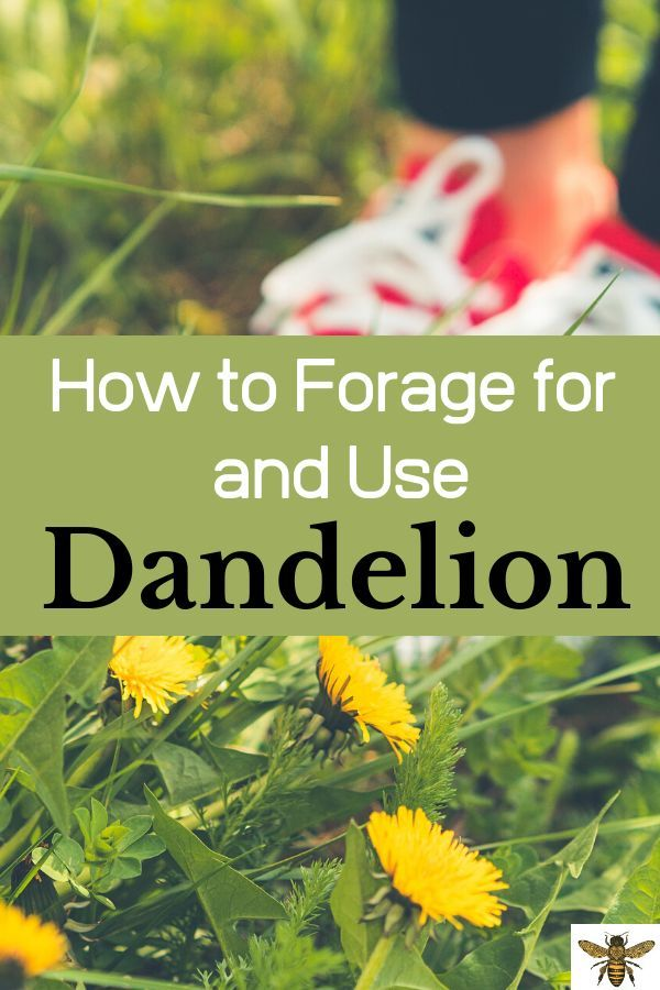 How Do You Make Dandelion Tea What Parts Of The Dandelion Are Edible Is Dandelion Bread Good Yes I Ve Got Al In 2020 Dandelion Tea Dandelion Dandelion Recipes
