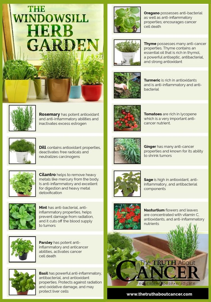 Herb Garden Indoor best 25+ herb garden indoor ideas on pinterest | indoor herbs