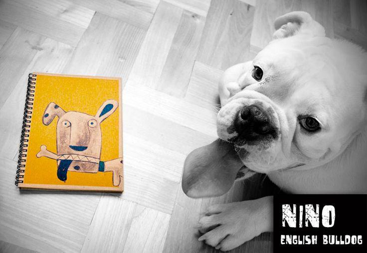Nino (the bulldog) and  'Lucky'