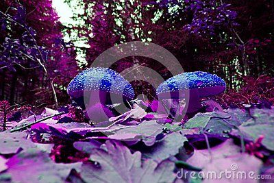 Two mushrooms in the woods of fairy tales