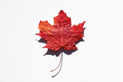 Maple Leaf: Happy Canada Day!