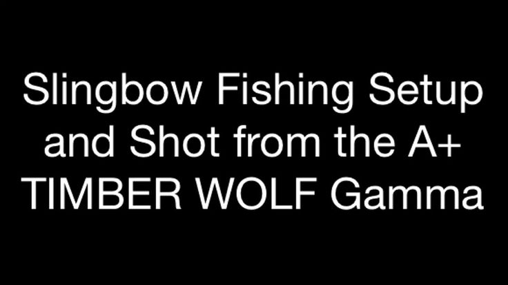 "I know it's not in the eastern states, but around here we can already feel spring in the air!! I'm already thinking about the slingbow fishing season!! Here's a short video on shooting the TIMBER WOLF Gamma with 50lbs.@28"" power bands for bowfishing!! Enjoy!! :)  https://www.youtube.com/watch?v=pGXg75Vs7_I"