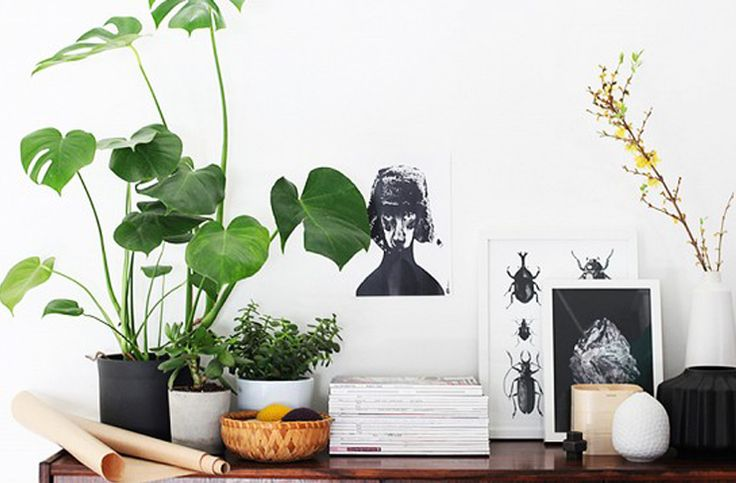 Indoor plants are filling up our Insta and Pinterest feeds at the moment. We ain't complaining though, they're super cute and make our homes look gorgeous.