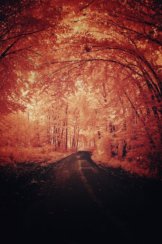 Wouldnt it be great to #ridecolorfully through this forest via @katespadeny
