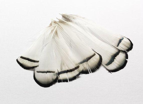 Piume naturali | Piume di orecchini | Modisteria gioielli fare mestieri forniture | Accessori per capelli FA07 White Lady Amherst fagiano (6pcs)