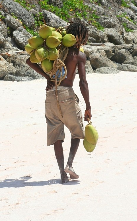 75 best images about coconut pictures on pinterest for Gardening tools mauritius