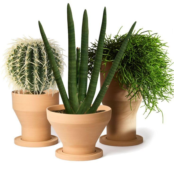 Oltre 1000 idee su vasi da giardino su pinterest for Vasi erba
