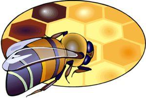 Rośliny przyjazne dla pszczół i motyli. Zapewne wiecie, że coraz mniej ich bywa w naszym świecie?!  Pszczoły, trzmiele i motyle to prawdziwi przyjaciele ogrodnika. Zaproś ich na swoją działkę.