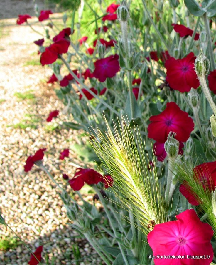 L'orto dei colori: Fiori da cortile