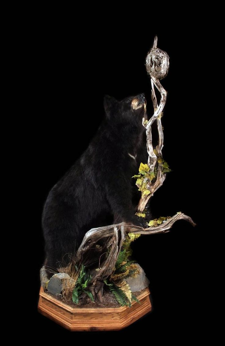 11 best black bear images on pinterest | taxidermy, black bear and