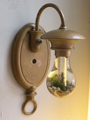 """""""Life Fixture"""" made as an artist for an expo - I love the idea of taken the light bulb terrariums and replacing them into the light fixture."""