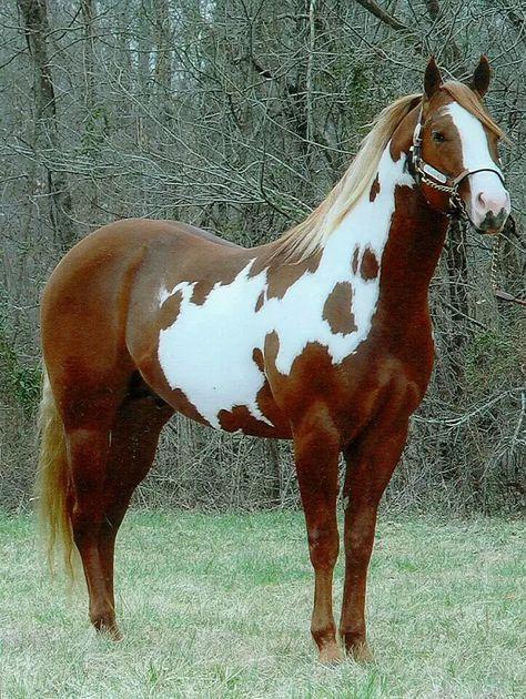 Foto: Hermosa imagen de un caballo #Beautiful #Nature #Pictures #amazing #Animales #Interesting #Different #Spectacular #Birds #Animals #Hermosa #Nature #Imágenes #Súper #Espectacular #Interesante #Diferente #Aves
