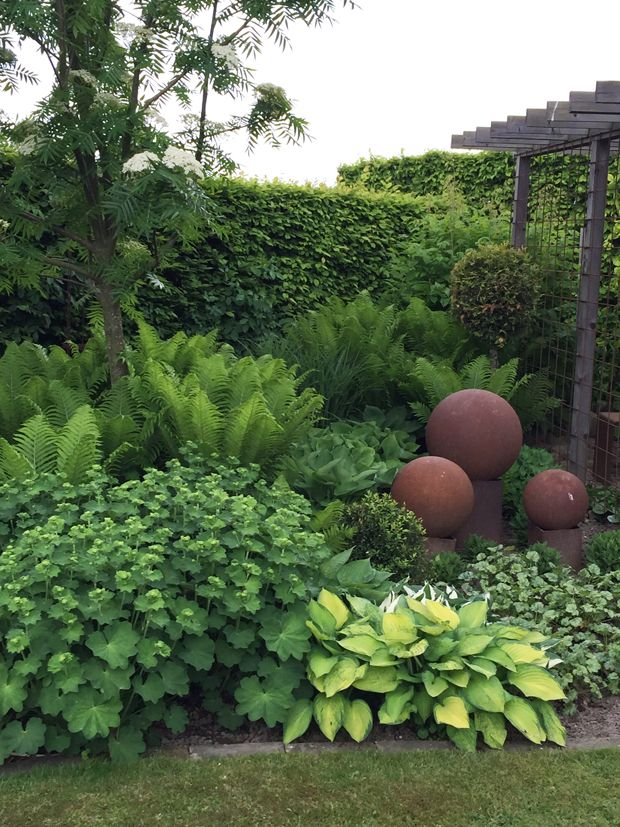 A perennial shade combination of hosta,fern,and lady's mantle set with terra cotta garden art.