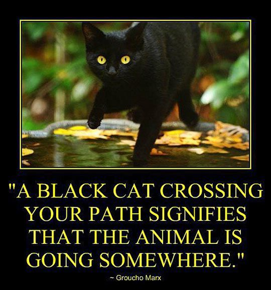 A black cat crossing your path…