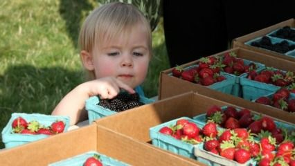 Sydney's Best Farmers' Markets for Kids | ellaslist