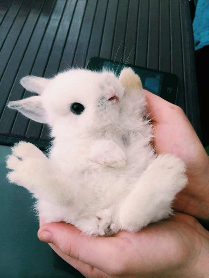 Little fluffy white baby bunny waving hello! Couldn't be cuter!
