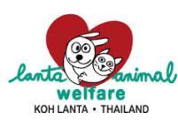 What to do on Koh Lanta - Help Lanta Animal Welfare - A Waitress Abroad