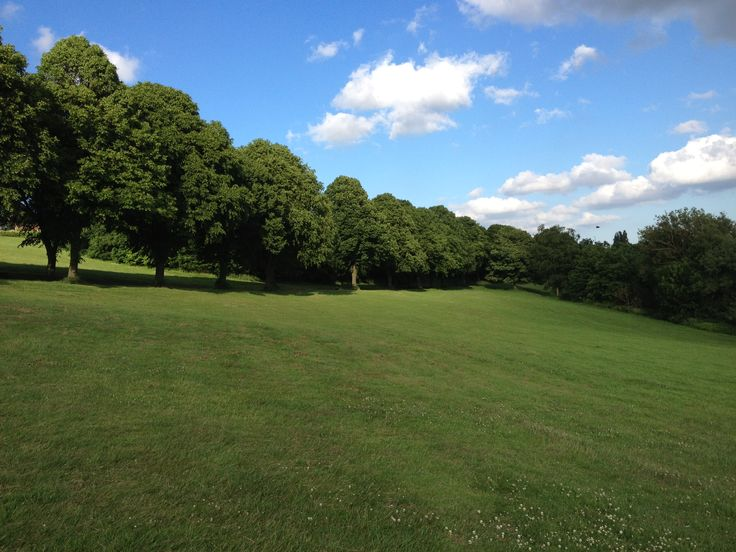 Big trees and big sky in Rothwell park