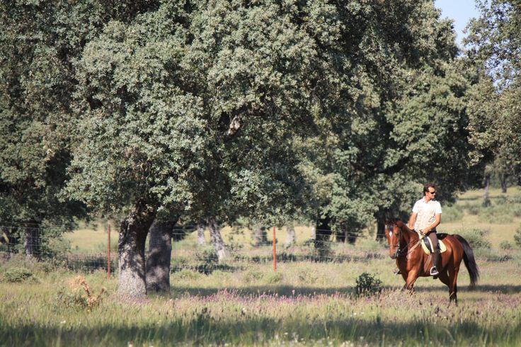 Rutas a caballo en Cáceres. Toda la información sobre rutas a caballo en Extremadura. Carlos V, Parque Nacional de Monfragüe, Guadalupe.