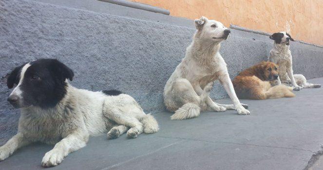 We press the Cabildo of Tenerife not to kill stray dogs!