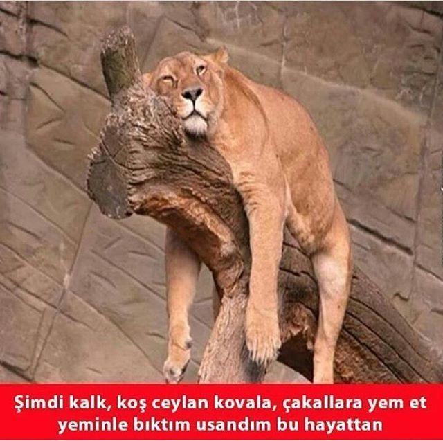 #komikresim #komikresimler #komiksozler #komikcaps #mizah #guzelresim #guzelresimler #meram #kızkulesi #konya #çanakkale #karikatur #fıkra #caps #capsler #gaziantep #incicaps #cagritaner #istanbul #turkiye #mustafakemalatatürk http://turkrazzi.com/ipost/1523357193389734755/?code=BUkDUvaB_tj