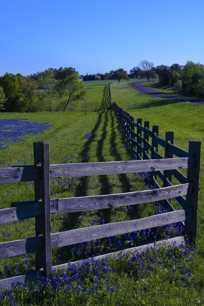 https://flic.kr/p/6dMxZN | Fence Shadow | Sometimes I do get to places just when God's ready to have somebody click the shutter. ~Ansel Adams  Backroads Texas with Bluebonnets