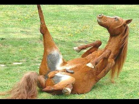 Top 10 Funny Horse Videos Compilation 2014 [NEW]