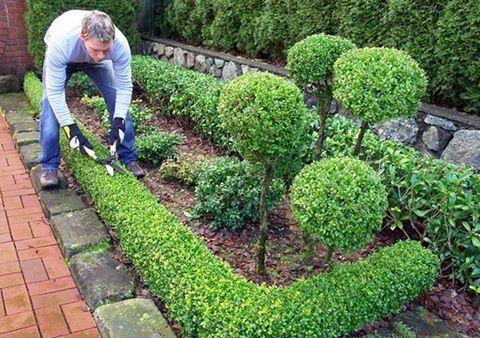 """Дизайн сада украсит фигурная стрижка деревьев, кустарников   """"Дача - Мания"""""""