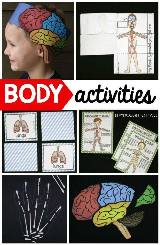Fun human body activities for kids! Great science centers and science activities teaching about human body systems.