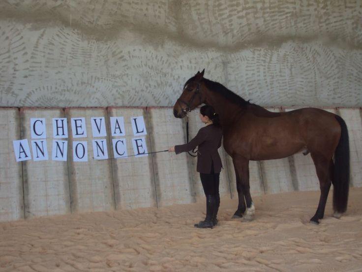 Apprendre ChevalAnnonce à un dada, plutôt naturel ! #ca #chevalannonce #cheval #humour