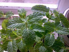 Les plantes s'utilisent depuis toujours dans la décoration d'intérieur des maisons, des bureaux ou des commerces car elles donnent un aspect frais et naturel à ces lieux, mais également parce qu'elles améliorent le flux d'énergies positives tout en chassant les énergies négatives.