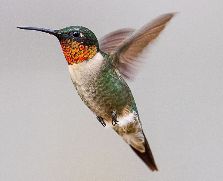 Foldaway Tote - Hummingbird Nector by VIDA VIDA QtiW9x